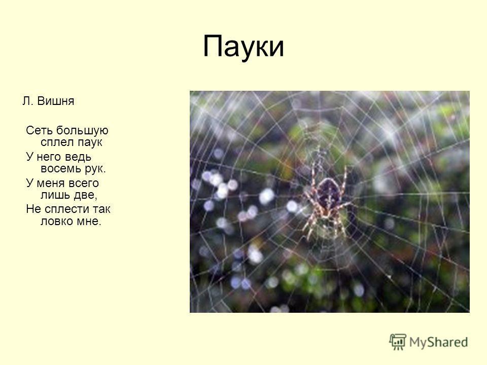 Пауки Л. Вишня Сеть большую сплел паук У него ведь восемь рук. У меня всего лишь две, Не сплести так ловко мне.