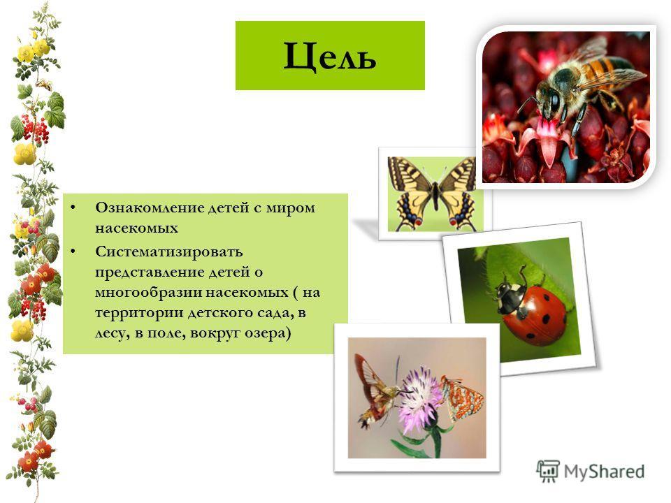 Цель Ознакомление детей с миром насекомых Систематизировать представление детей о многообразии насекомых ( на территории детского сада, в лесу, в поле, вокруг озера)