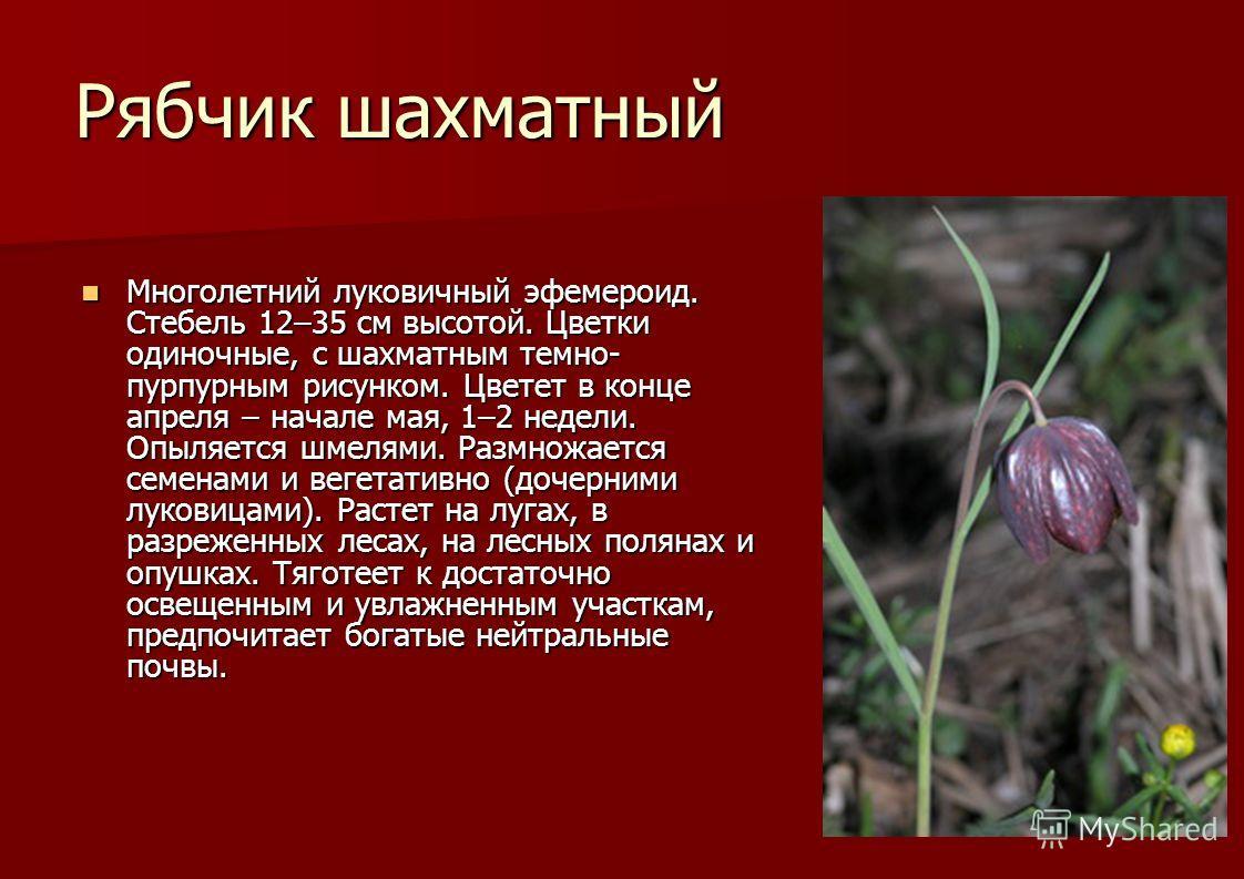 Рябчик шахматный Многолетний луковичный эфемероид. Стебель 12–35 см высотой. Цветки одиночные, с шахматным темно- пурпурным рисунком. Цветет в конце апреля – начале мая, 1–2 недели. Опыляется шмелями. Размножается семенами и вегетативно (дочерними лу