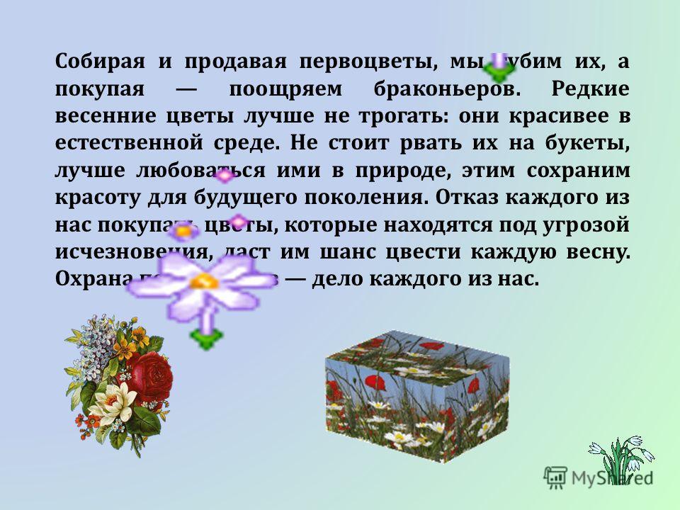 Собирая и продавая первоцветы, мы губим их, а покупая поощряем браконьеров. Редкие весенние цветы лучше не трогать: они красивее в естественной среде. Не стоит рвать их на букеты, лучше любоваться ими в природе, этим сохраним красоту для будущего пок