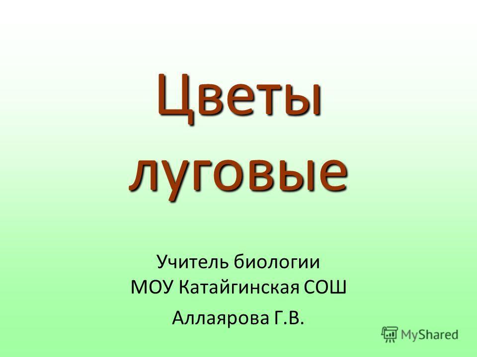 Цветы луговые Учитель биологии МОУ Катайгинская СОШ Аллаярова Г.В.