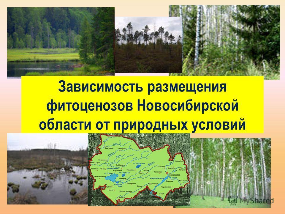 Зависимость размещения фитоценозов Новосибирской области от природных условий