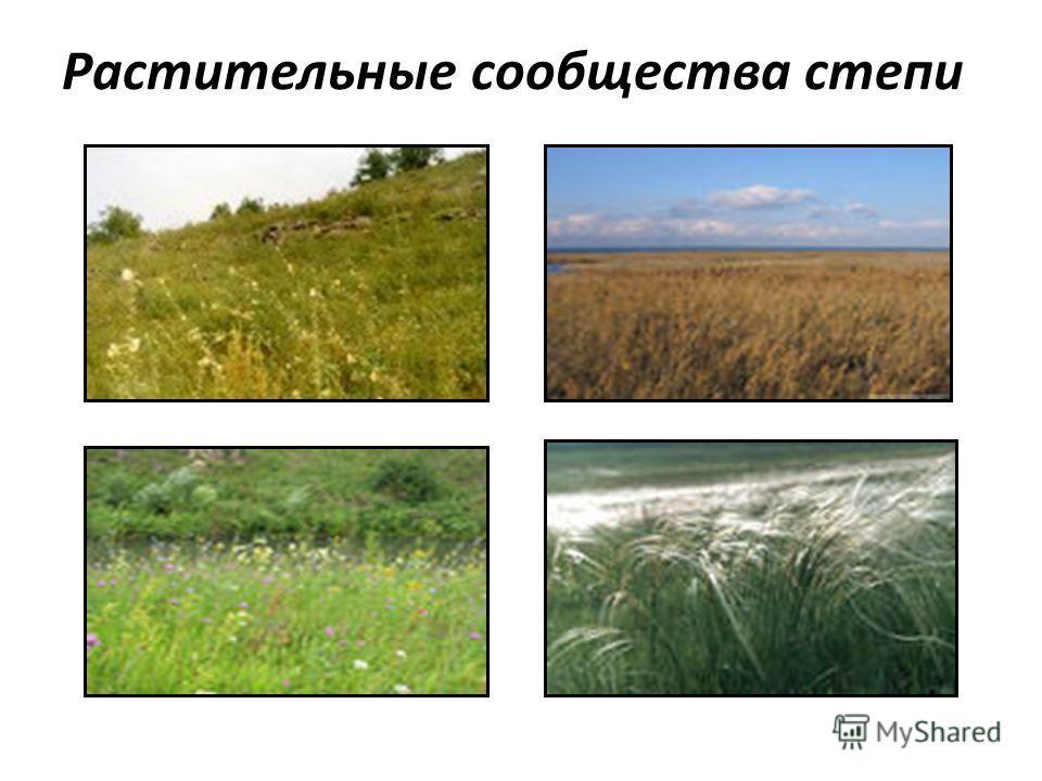 Растительные сообщества степи
