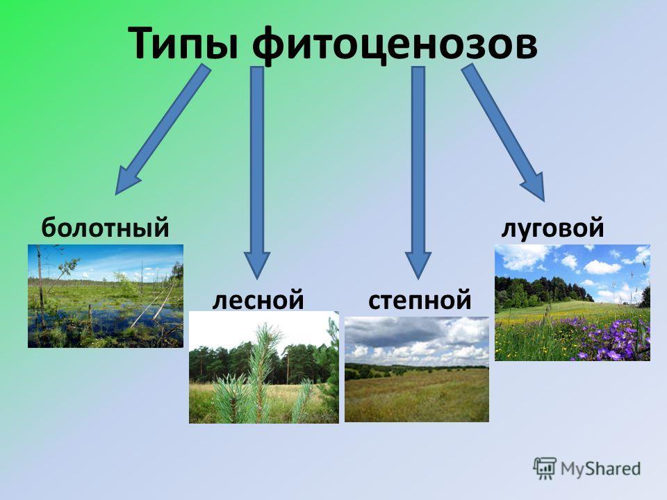 Типы фитоценозов болотный лесной степной луговой