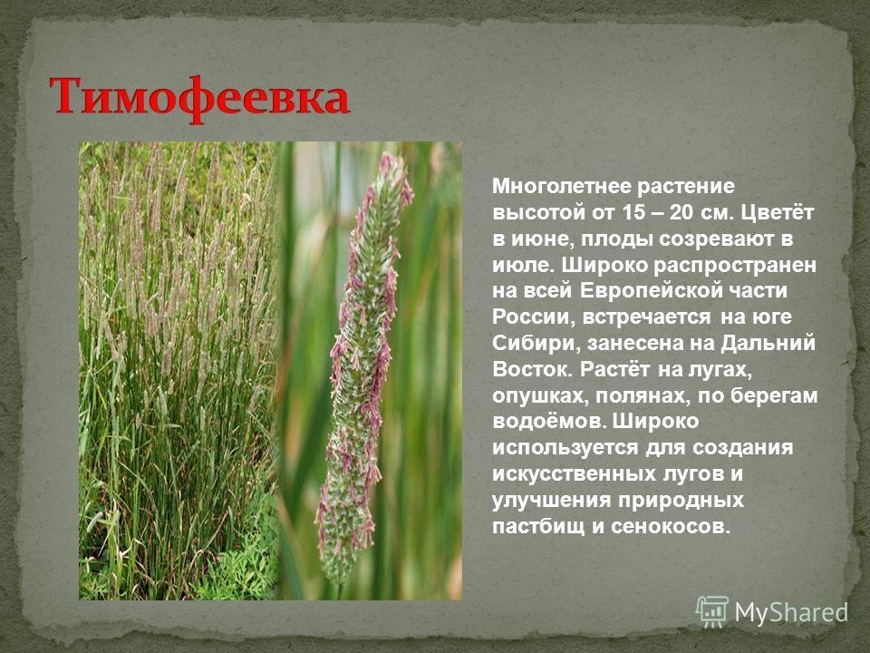 Многолетнее растение высотой от 15 – 20 см. Цветёт в июне, плоды созревают в июле. Широко распространен на всей Европейской части России, встречается на юге Сибири, занесена на Дальний Восток. Растёт на лугах, опушках, полянах, по берегам водоёмов. Ш