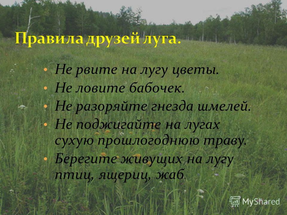 Не рвите на лугу цветы. Не ловите бабочек. Не разоряйте гнезда шмелей. Не поджигайте на лугах сухую прошлогоднюю траву. Берегите живущих на лугу птиц, ящериц, жаб.