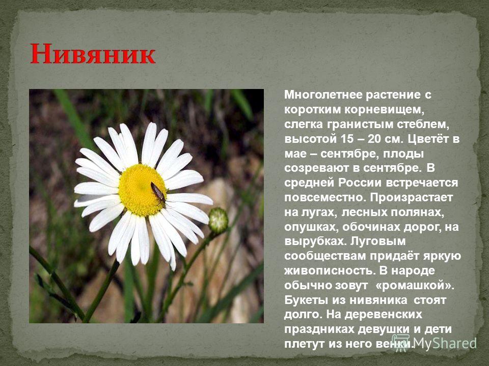 Многолетнее растение с коротким корневищем, слегка гранистым стеблем, высотой 15 – 20 см. Цветёт в мае – сентябре, плоды созревают в сентябре. В средней России встречается повсеместно. Произрастает на лугах, лесных полянах, опушках, обочинах дорог, н