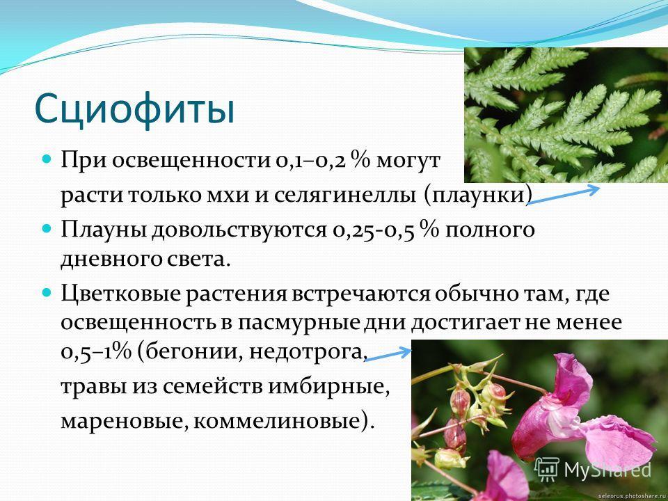 Сциофиты При освещенности 0,1–0,2 % могут расти только мхи и селагинеллы (плаунки) Плауны довольствуются 0,25 0,5 % полного дневного света. Цветковые растения встречаются обычно там, где освещенность в пасмурные дни достигает не менее 0,5–1% (бегонии