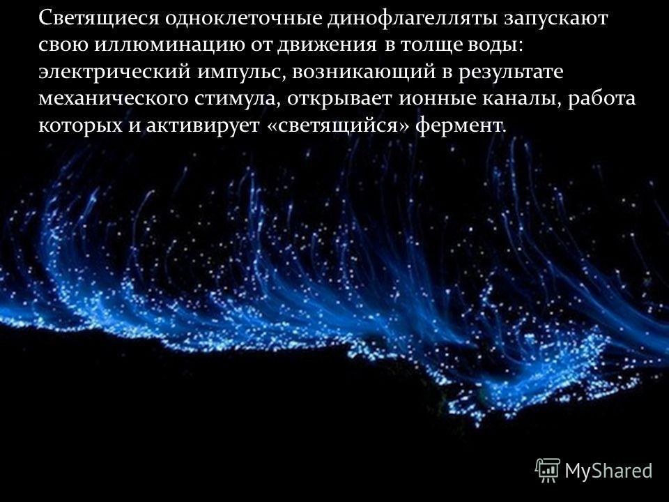 Светящиеся одноклеточные динофлагелляты запускают свою иллюминацию от движения в толще воды: электрический импульс, возникающий в результате механического стимула, открывает ионные каналы, работа которых и активирует «светящийся» фермент.