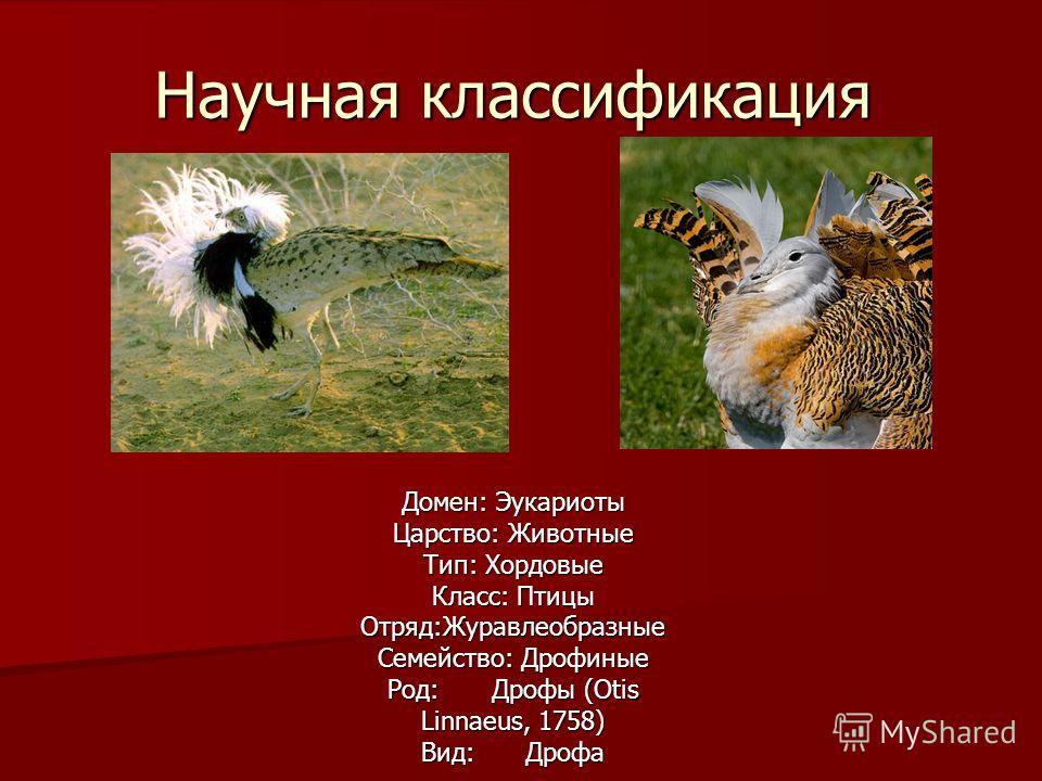 Научная классификация Домен: Эукариоты Царство: Животные Тип: Хордовые Класс: Птицы Отряд:Журавлеобразные Семейство: Дрофиные Род: Дрофы (Otis Linnaeus, 1758) Вид: Дрофа