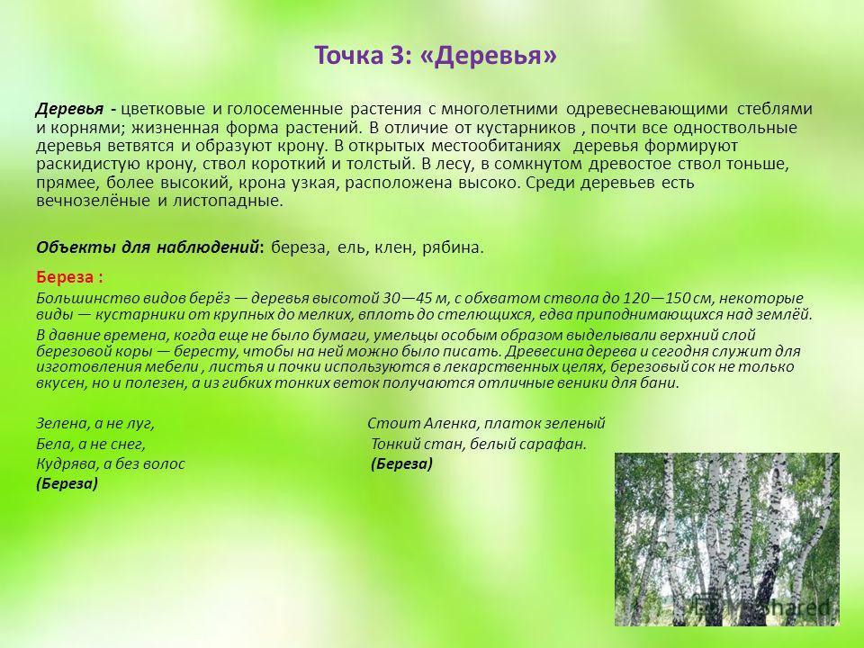 Точка 3: «Деревья» Деревья - цветковые и голосеменные растения с многолетними одревесневающими стеблями и корнями; жизненная форма растений. В отличие от кустарников, почти все одноствольные деревья ветвятся и образуют крону. В открытых местообитания
