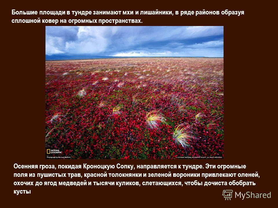 Большие площади в тундре занимают мхи и лишайники, в ряде районов образуя сплошной ковер на огромных пространствах. Осенняя гроза, покидая Кроноцкую Сопку, направляется к тундре. Эти огромные поля из пушистых трав, красной толокнянки и зеленой ворони