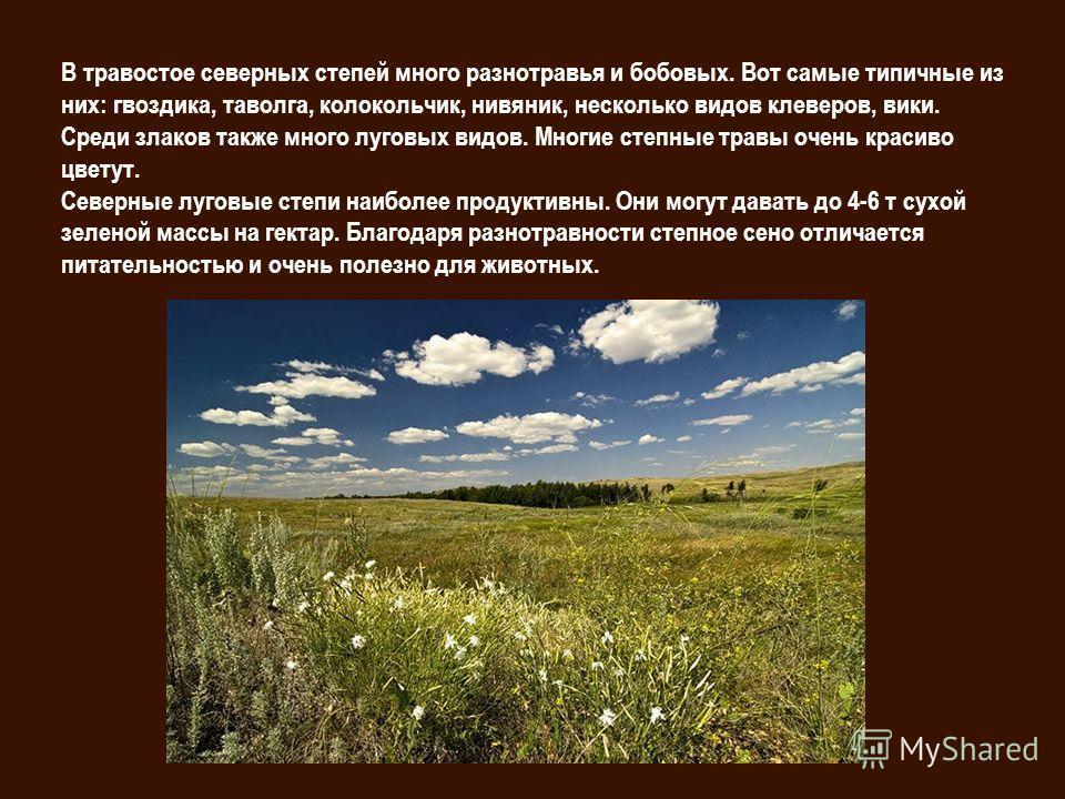В травостое северных степей много разнотравья и бобовых. Вот самые типичные из них: гвоздика, таволга, колокольчик, нивяник, несколько видов клеверов, вики. Среди злаков также много луговых видов. Многие степные травы очень красиво цветут. Северные л
