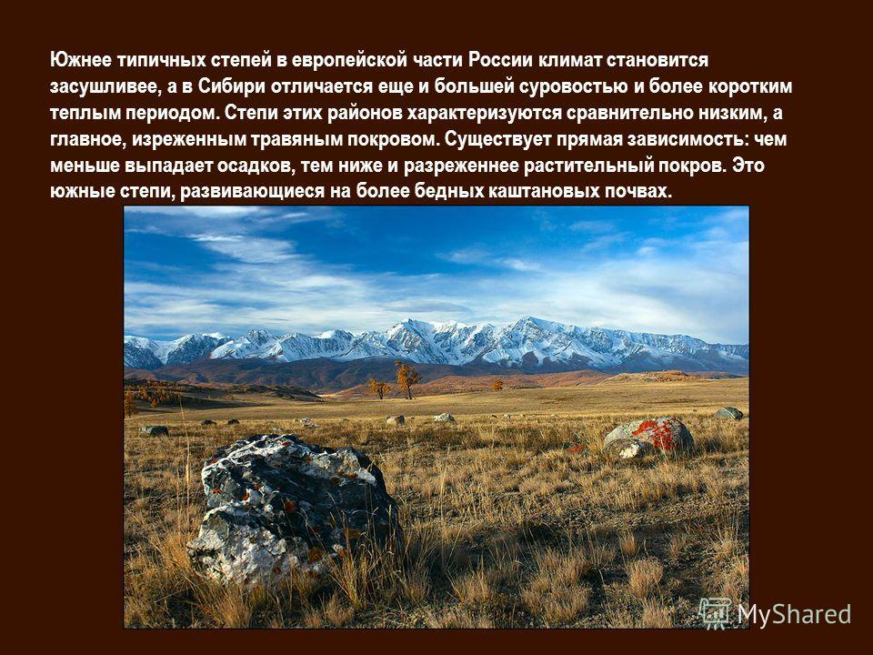 Южнее типичных степей в европейской части России климат становится засушливее, а в Сибири отличается еще и большей суровостью и более коротким теплым периодом. Степи этих районов характеризуются сравнительно низким, а главное, изреженным травяным пок