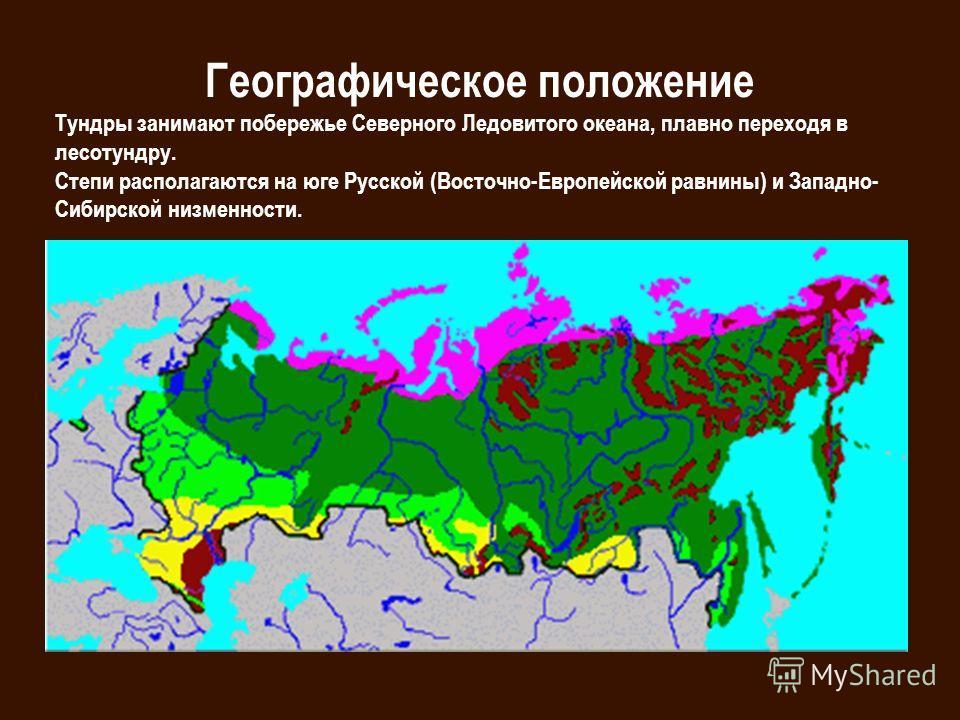 Географическое положение Тундры занимают побережье Северного Ледовитого океана, плавно переходя в лесотундру. Степи располагаются на юге Русской (Восточно-Европейской равнины) и Западно- Сибирской низменности.