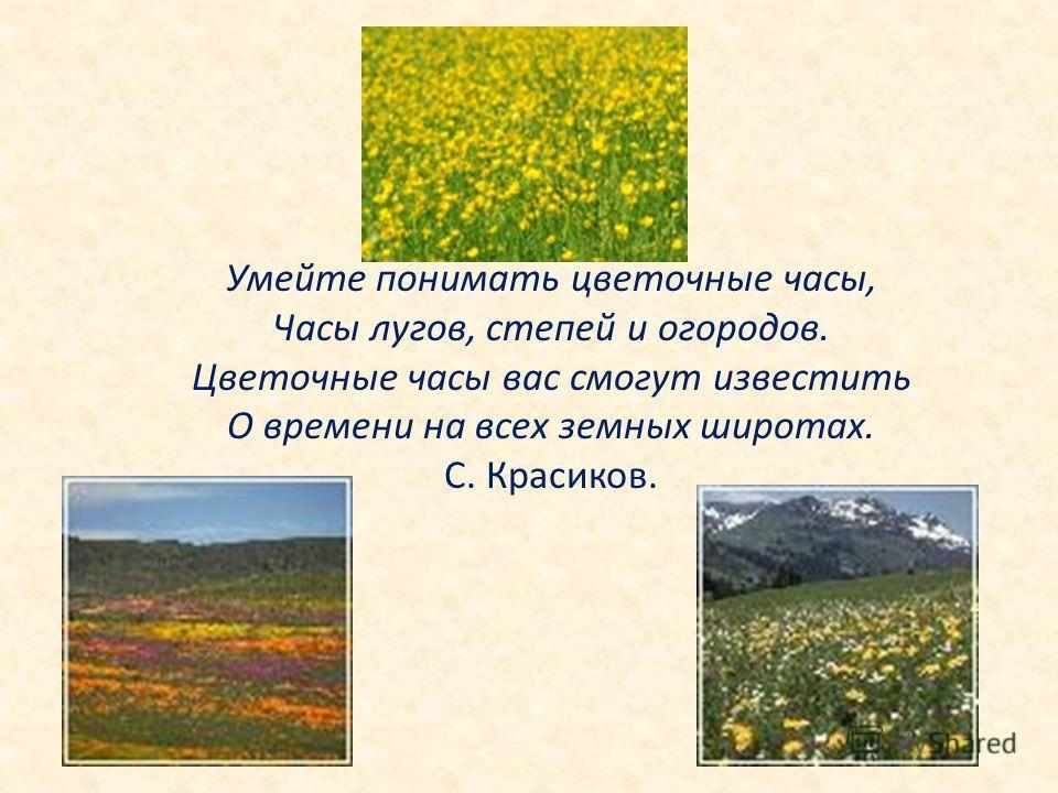 Умейте понимать цветочные часы, Часы лугов, степей и огородов. Цветочные часы вас смогут известить О времени на всех земных широтах. С. Красиков.