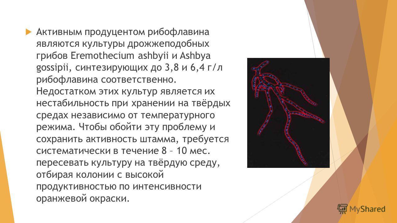Активным продуцентом рибофлавина являются культуры дрожжеподобных грибов Eremothecium ashbyii и Ashbya gossipii, синтезирующих до 3,8 и 6,4 г/л рибофлавина соответственно. Недостатком этих культур является их нестабильность при хранении на твёрдых ср