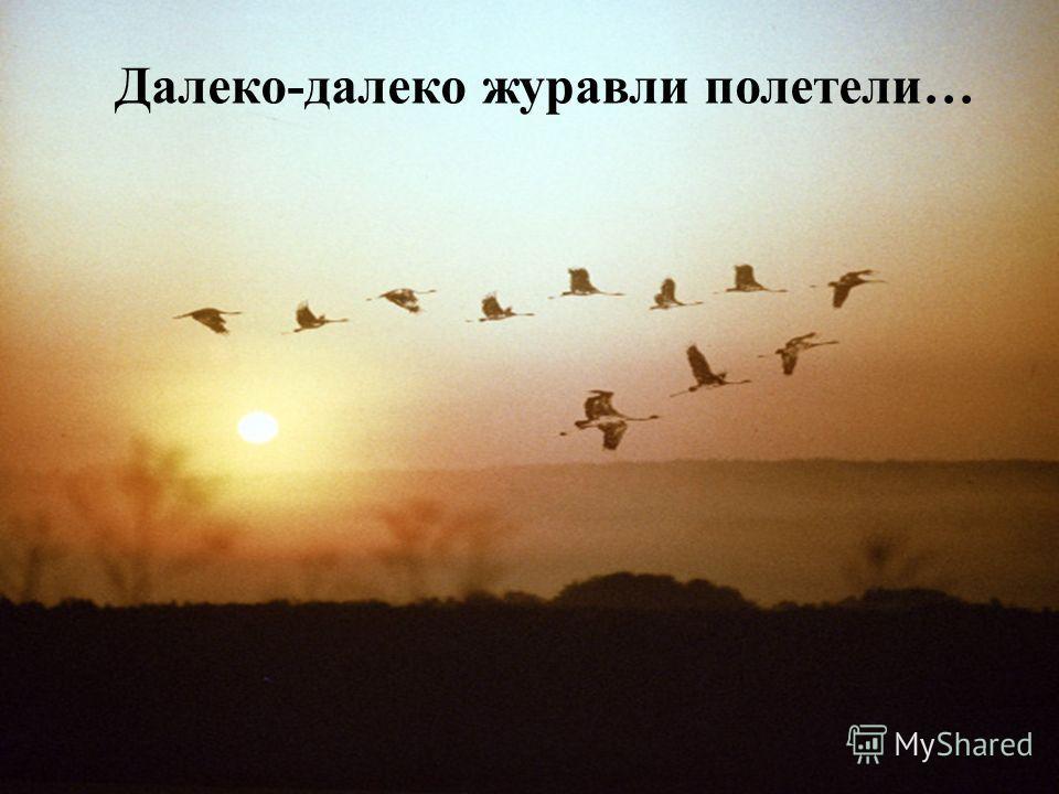 Далеко-далеко журавли полетели…