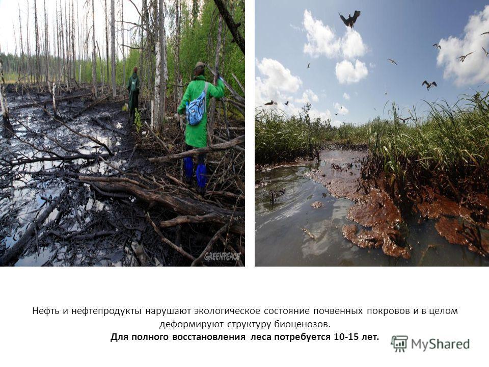 Нефть и нефтепродукты нарушают экологическое состояние почвенных покровов и в целом деформируют структуру биоценозов. Для полного восстановления леса потребуется 10-15 лет.