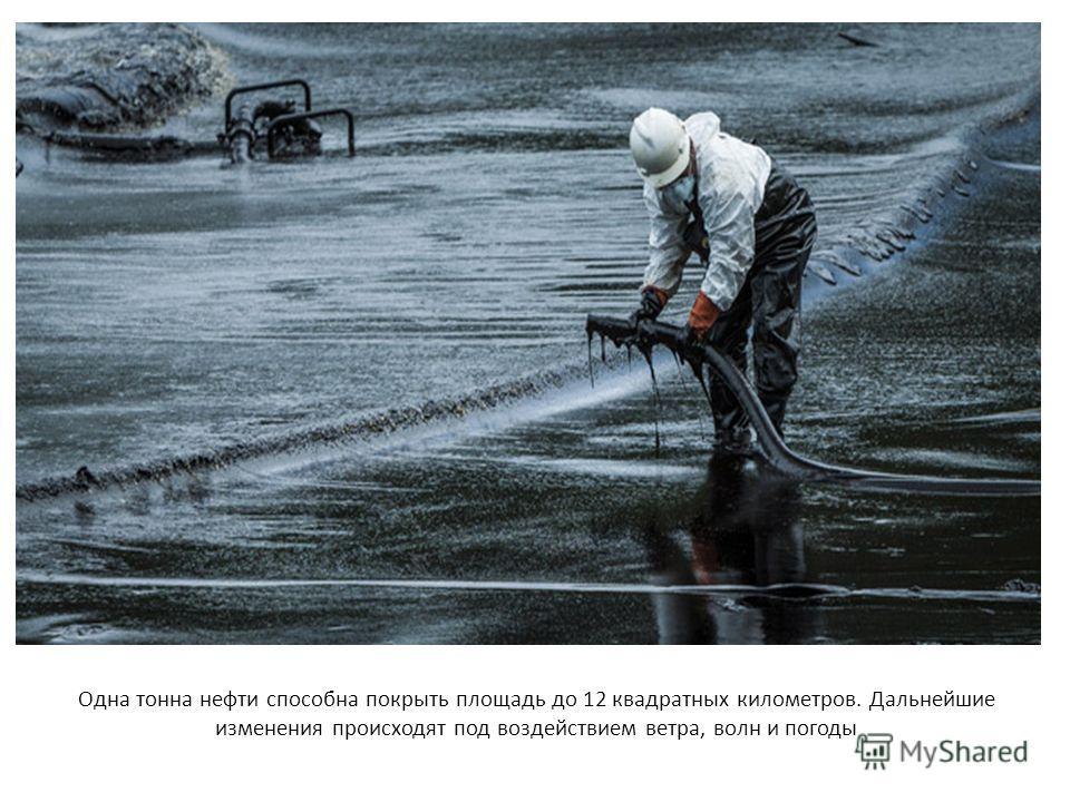 Одна тонна нефти способна покрыть площадь до 12 квадратных километров. Дальнейшие изменения происходят под воздействием ветра, волн и погоды