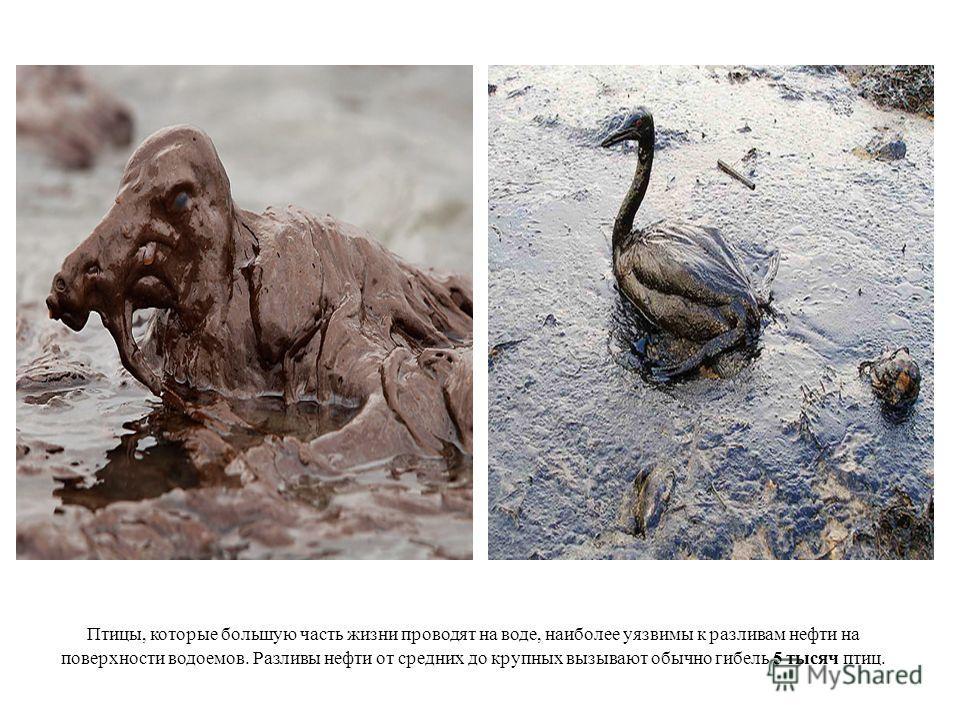 Птицы, которые большую часть жизни проводят на воде, наиболее уязвимы к разливам нефти на поверхности водоемов. Разливы нефти от средних до крупных вызывают обычно гибель 5 тысяч птиц.