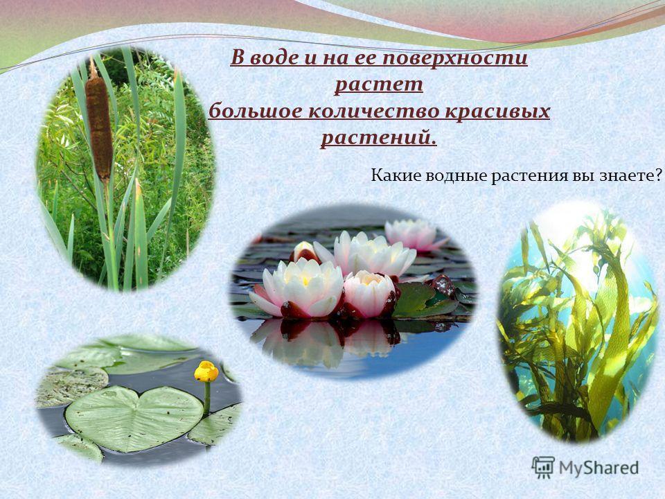 В воде и на ее поверхности растет большое количество красивых растений. Какие водные растения вы знаете?