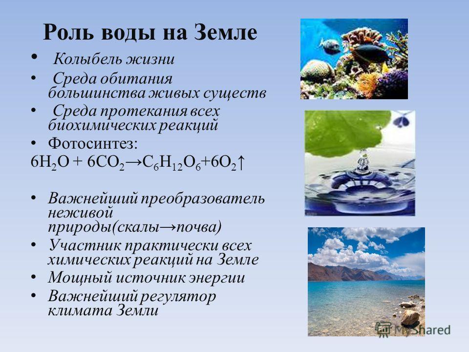 Роль воды на Земле Колыбель жизни Среда обитания большинства живых существ Среда протекания всех биохимических реакций Фотосинтез: 6Н 2 О + 6СО 2 С 6 Н 12 О 6 +6О 2 Важнейший преобразователь неживой природы(скалы почва) Участник практически всех хими