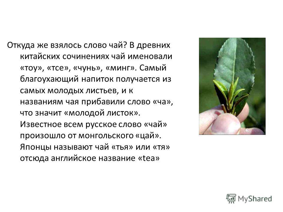 Откуда же взялось слово чай? В древних китайских сочинениях чай именовали «тау», «тсе», «сунь», «минг». Самый благоухающий напиток получается из самых молодых листьев, и к названиям чая прибавили слово «ча», что значит «молодой листок». Известное все