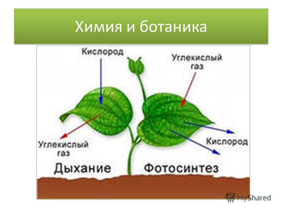 Химия и ботаника