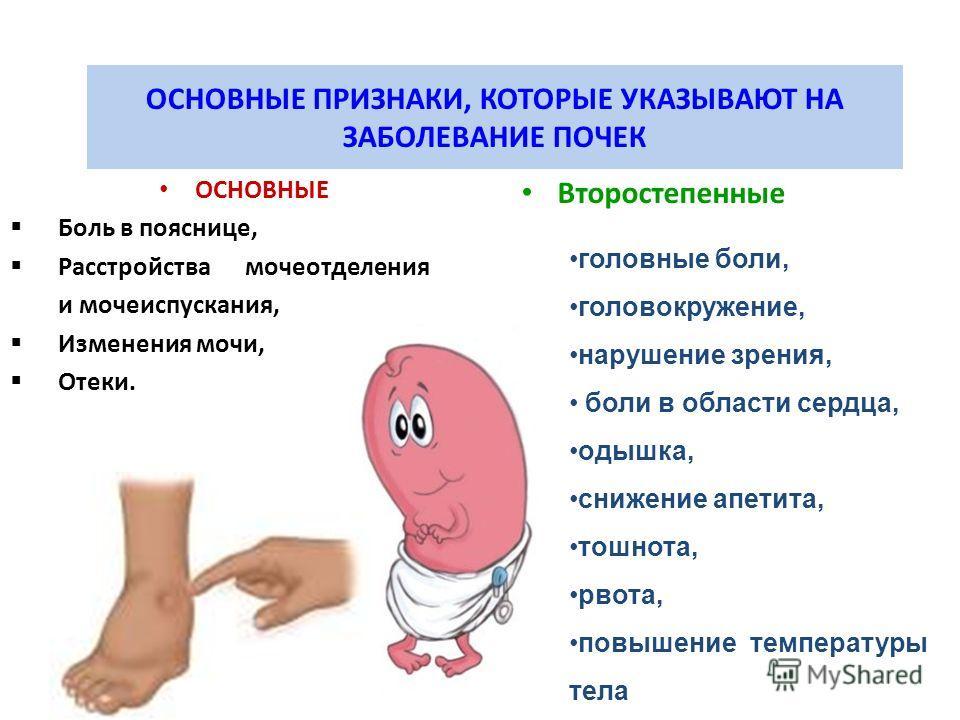 ОСНОВНЫЕ ПРИЗНАКИ, КОТОРЫЕ УКАЗЫВАЮТ НА ЗАБОЛЕВАНИЕ ПОЧЕК ОСНОВНЫЕ Боль в пояснице, Расстройства мочеотделения и мочеиспускания, Изменения мочи, Отеки. Второстепенные головные боли, головокружение, нарушение зрения, боли в области сердца, одышка, сни