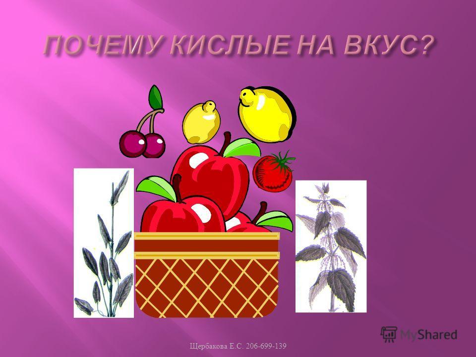 Щербакова Е. С. 206-699-139