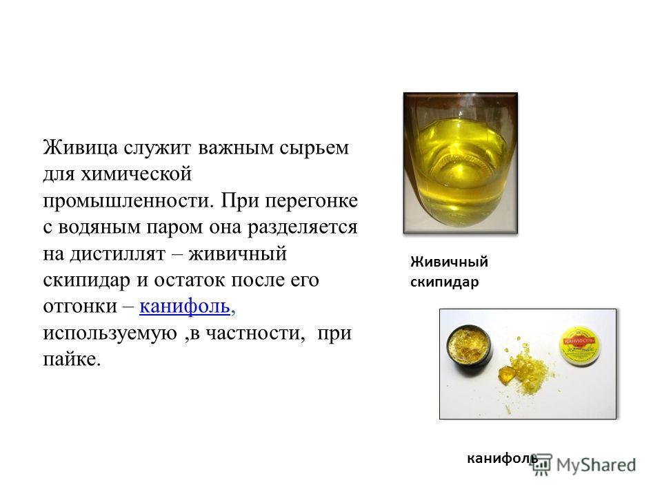 Живица служит важным сырьем для химической промышленности. При перегонке с водяным паром она разделяется на дистиллят – живичный скипидар и остаток после его отгонки – канифоль, используемую,в частности, при пайке.канифоль Живичный скипидар канифоль