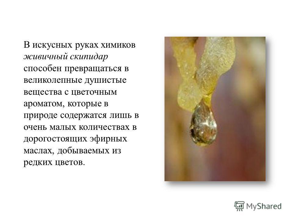 В искусных руках химиков живичный скипидар способен превращаться в великолепные душистые вещества с цветочным ароматом, которые в природе содержатся лишь в очень малых количествах в дорогостоящих эфирных маслах, добываемых из редких цветов.