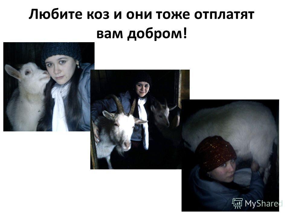 Любите коз и они тоже отплатят вам добром!