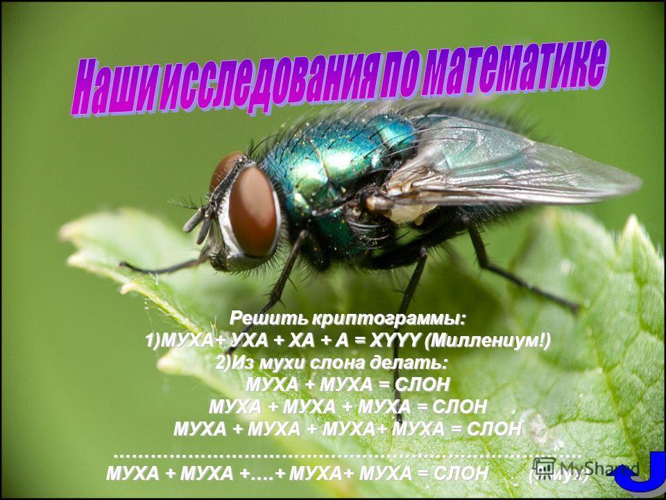 Решить криптограммы: 1)МУХА+ УХА + ХА + А = ХYYY (Миллениум!) 2)Из мухи слона делать: МУХА + МУХА = СЛОН МУХА + МУХА + МУХА = СЛОН МУХА + МУХА + МУХА+ МУХА = СЛОН …………………………………………………………………. МУХА + МУХА +….+ МУХА+ МУХА = СЛОН (9 мух)