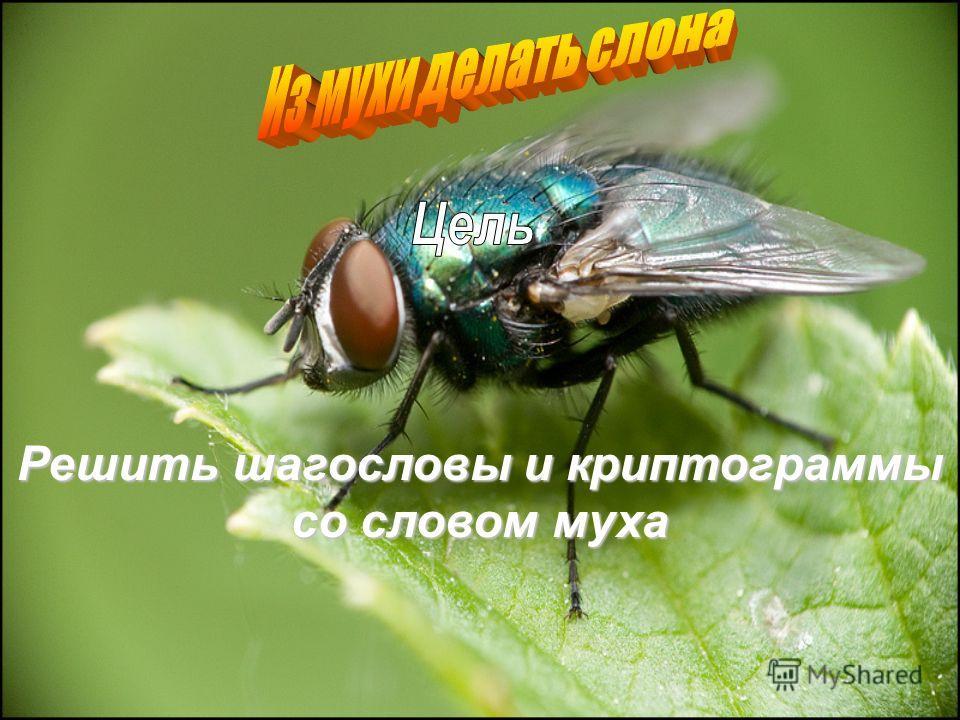 Решить шагословы и криптограммы со словом муха