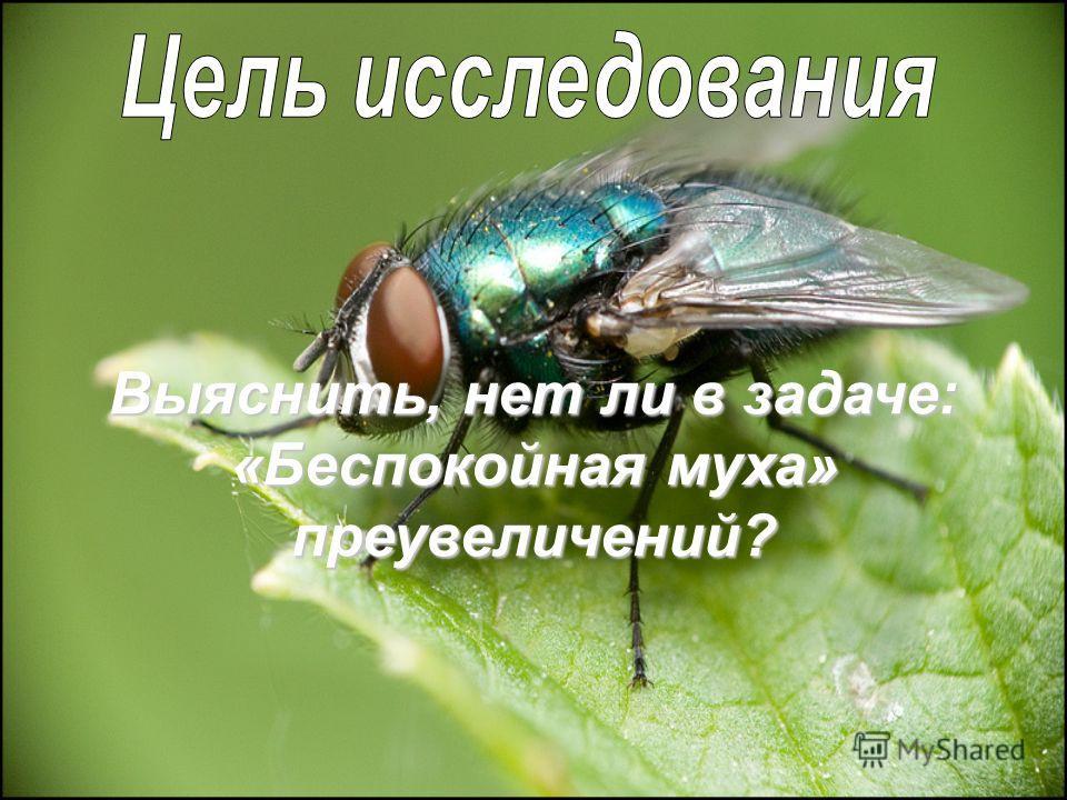 Выяснить, нет ли в задаче: «Беспокойная муха» преувеличений?