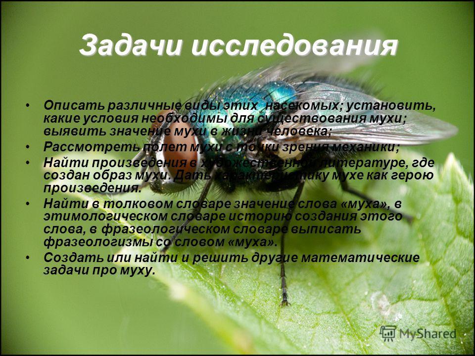 Задачи исследования Описать различные виды этих насекомых; установить, какие условия необходимы для существования мухи; выявить значение мухи в жизни человека; Рассмотреть полет мухи с точки зрения механики; Найти произведения в художественной литера
