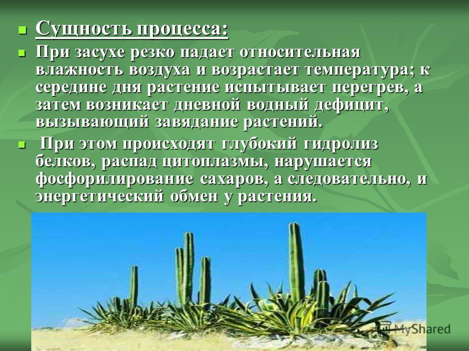 Сущность процесса: Сущность процесса: При засухе резко падает относительная влажность воздуха и возрастает температура; к середине дня растение испытывает перегрев, а затем возникает дневной водный дефицит, вызывающий завядание растений. При засухе р