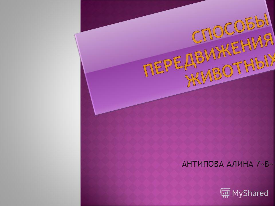 АНТИПОВА АЛИНА 7»В»