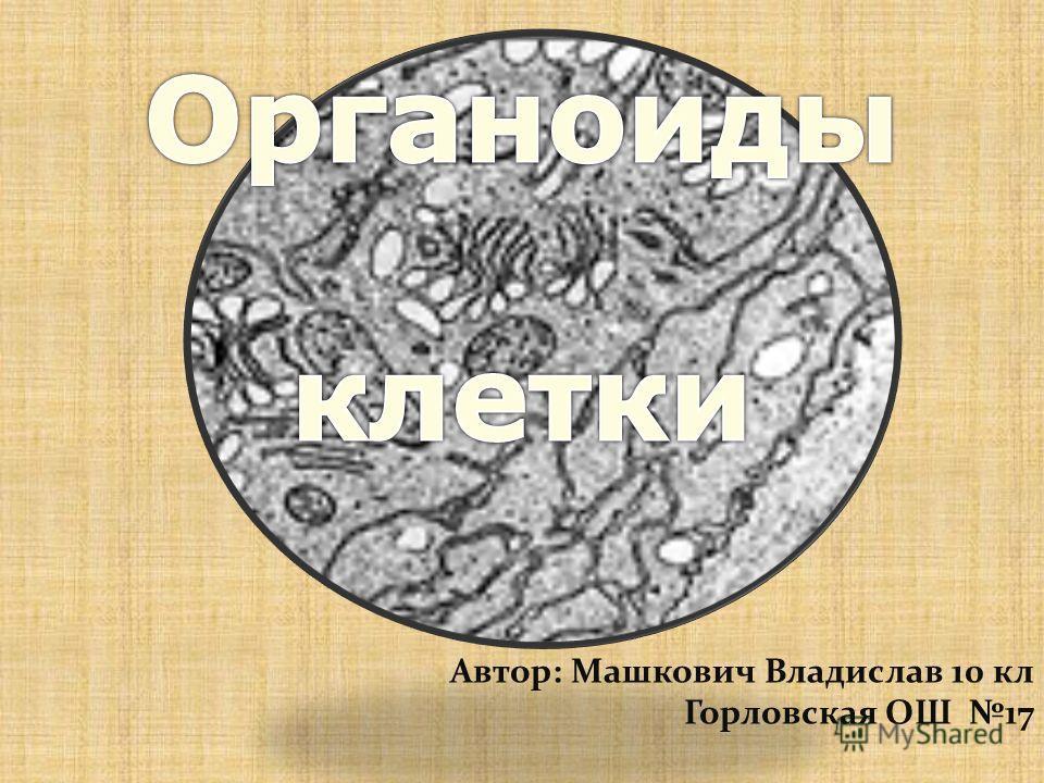 Автор: Машкович Владислав 10 кл Горловская ОШ 17