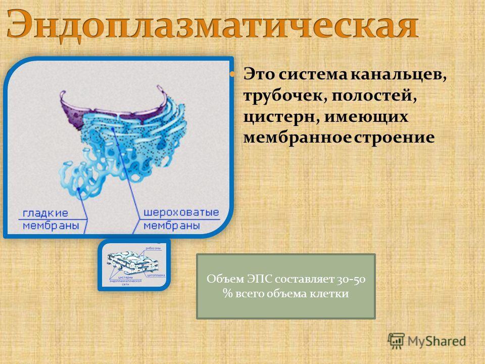 Это система канальцев, трубочек, полостей, цистерн, имеющих мембранное строение Объем ЭПС составляет 30-50 % всего объема клетки