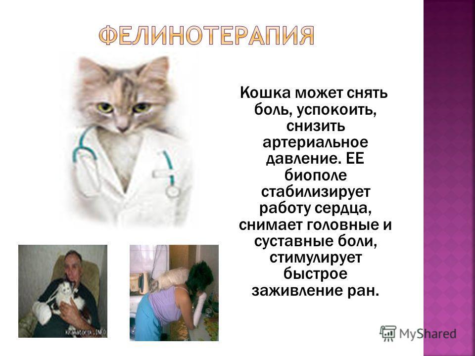 Кошка может снять боль, успокоить, снизить артериальное давление. ЕЕ биополе стабилизирует работу сердца, снимает головные и суставные боли, стимулирует быстрое заживление ран.