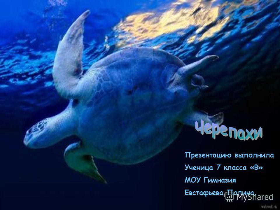 Презентацию выполнила Ученица 7 класса «В» МОУ Гимназия Евстафьева Полина.