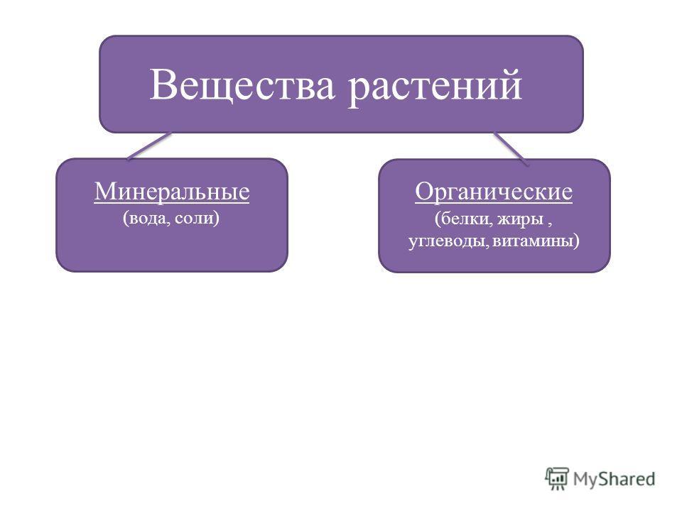 Вещества растений Минеральные (вода, соли) Органические (белки, жиры, углеводы, витамины)