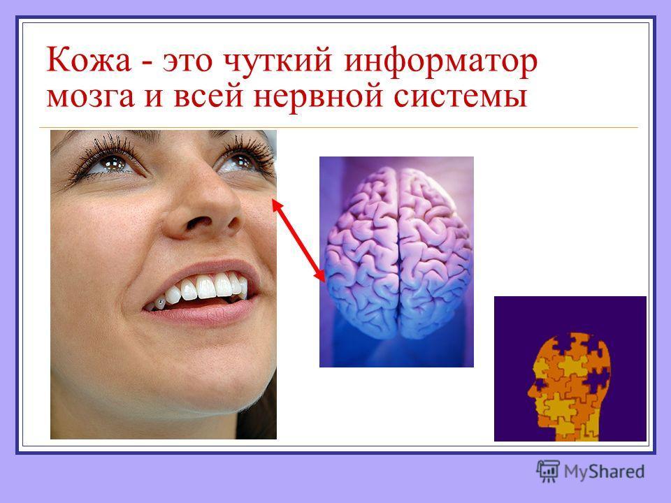 Кожа - это чуткий информатор мозга и всей нервной системы