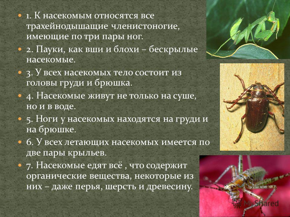 1. К насекомым относятся все трахейнодышащие членистоногие, имеющие по три пары ног. 2. Пауки, как вши и блохи – бескрылые насекомые. 3. У всех насекомых тело состоит из головы груди и брюшка. 4. Насекомые живут не только на суше, но и в воде. 5. Ног