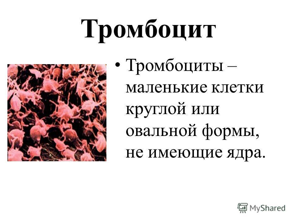Тромбоцит Тромбоциты – маленькие клетки круглой или овальной формы, не имеющие ядра.