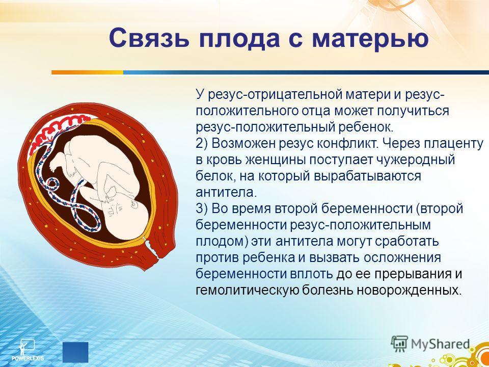 Связь плода с матерью У резус-отрицательной матери и резус- положительного отца может получиться резус-положительный ребенок. 2) Возможен резус конфликт. Через плаценту в кровь женщины поступает чужеродный белок, на который вырабатываются антитела. 3