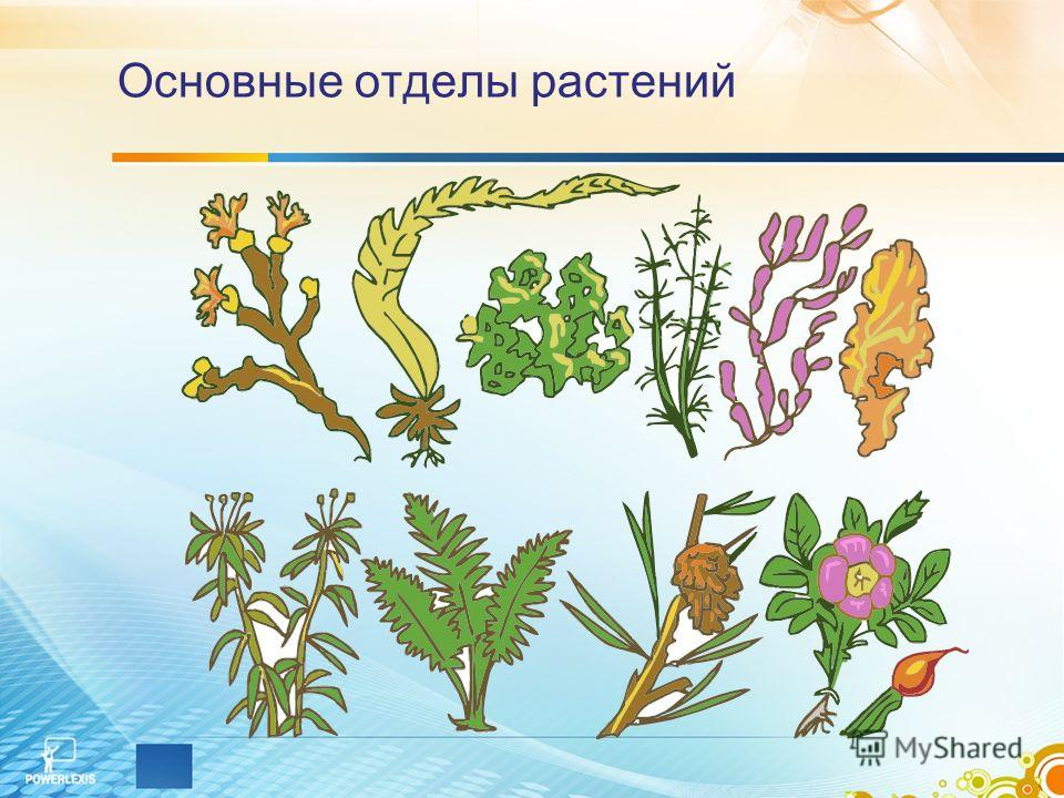 Основные отделы растений
